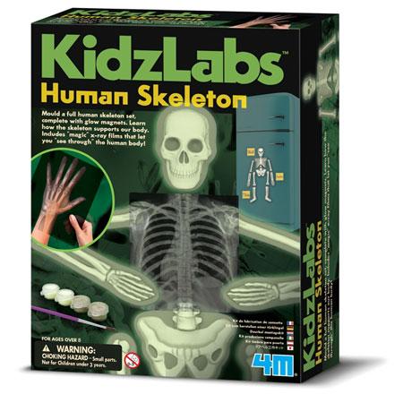 Kidzlabs - Menschliches Skelettsystem (ExpK)